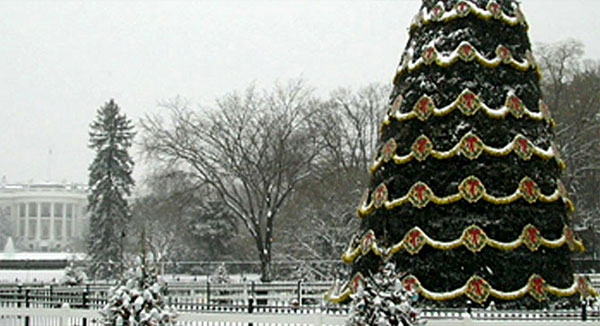 National Christmas Tree 2002